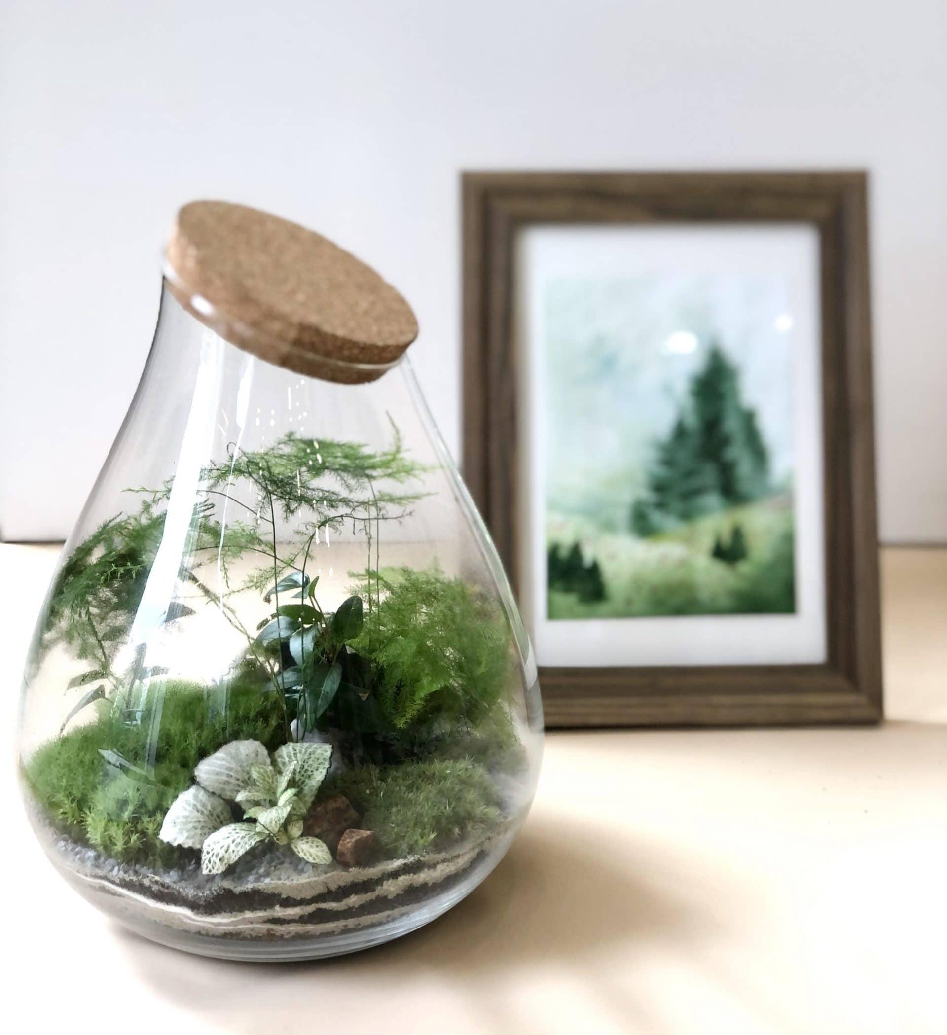 Zestaw Roślinny – Las w słoju + obrazek