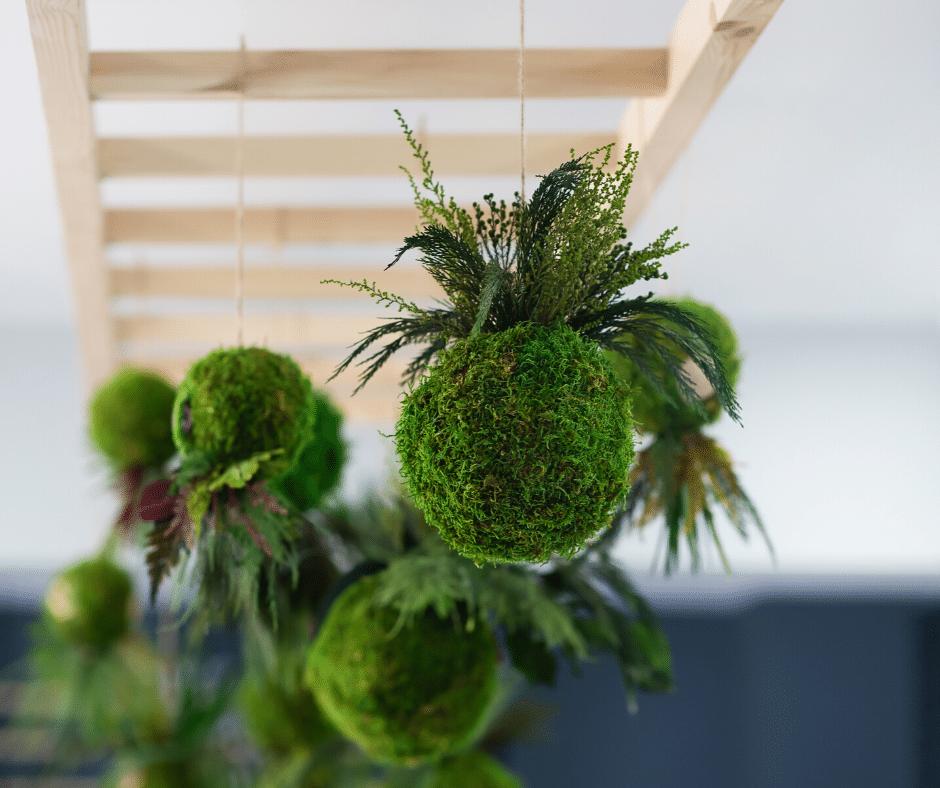 Kokedama – japońska sztuka sadzenia roślin