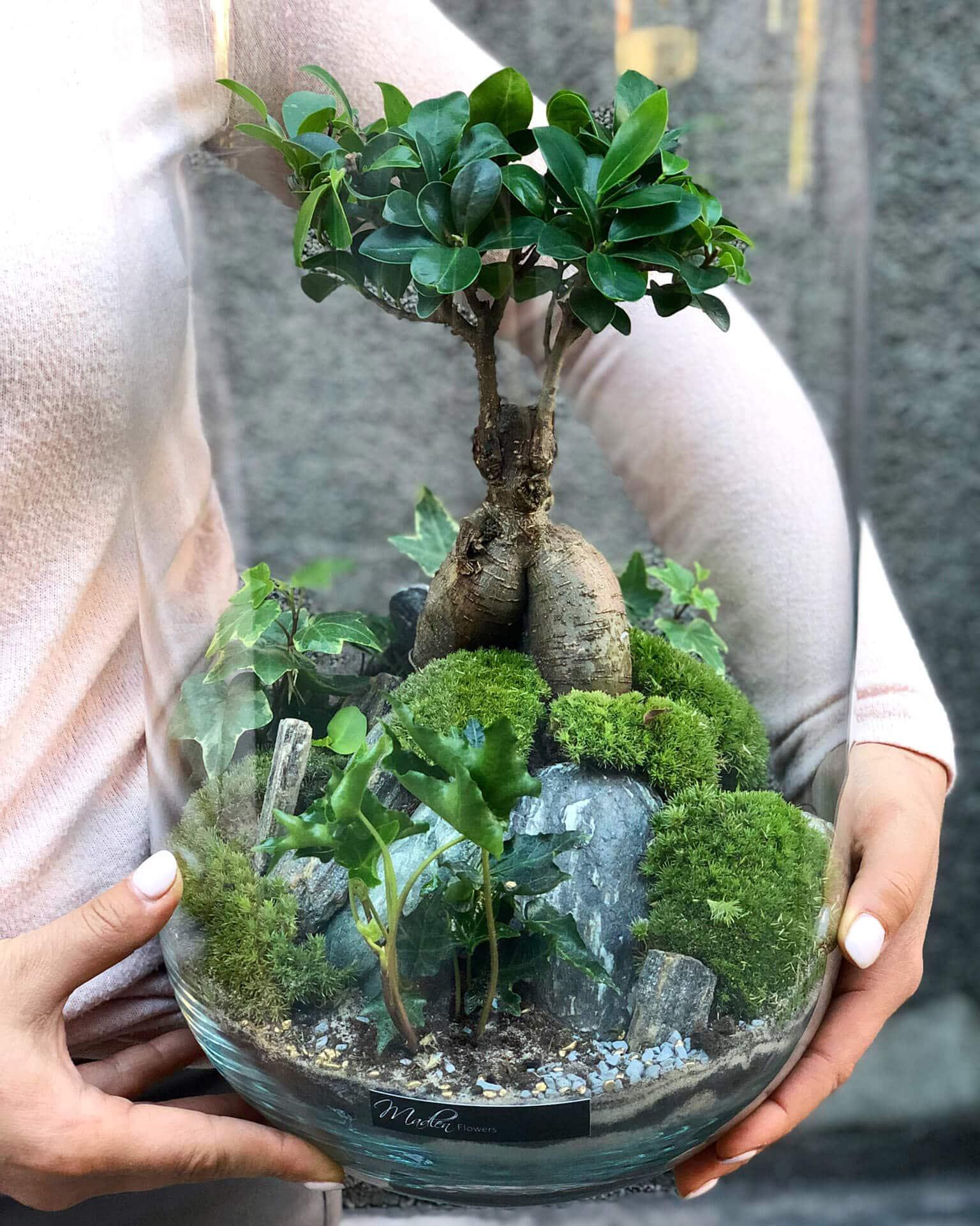Las w słoju – Bonsai